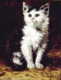 EW 0014 – Katze