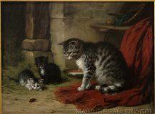 EW 0421 – Katzen mit Käfer