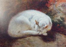 EW 0479 – Schlafende Katze